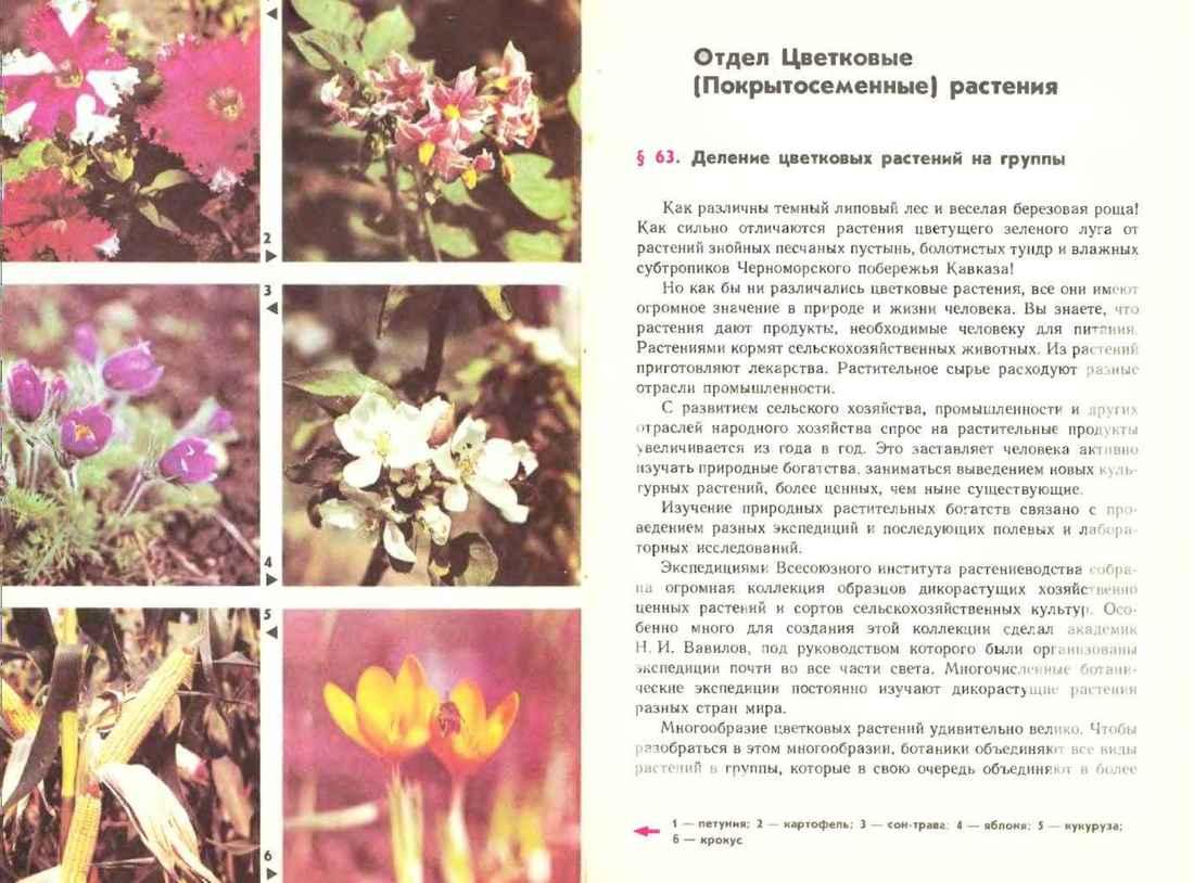 Desert Flower Epub