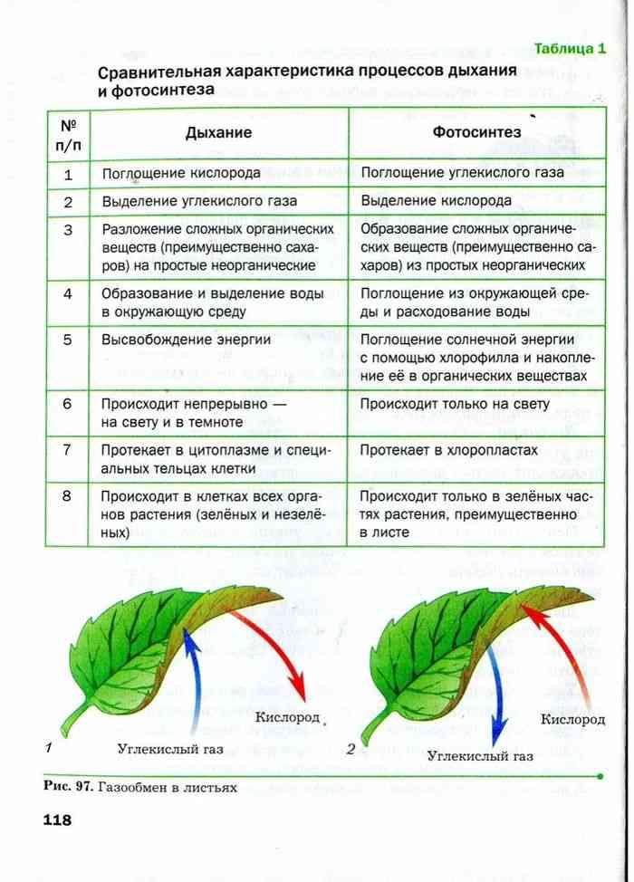 Сравнение процесса фотосинтеза и дыхания преодоления