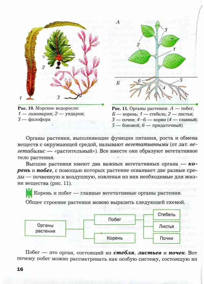 гдз по биологии 6 класс пономарева корнилова кучменко учебник