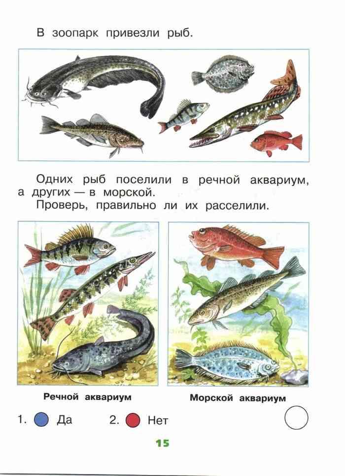 Славянской письменности, картинки по окружающему миру 1 класс